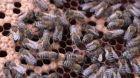 Včelí svět
