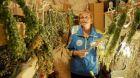 Sušárna a výrobna bylinných čajů v panelákovém bytě