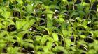 Doma vypěstovaná zelenina