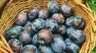 Staré ovocné odrůdy