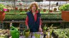 Výživa okrasných rostlin