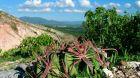 České stopy v rostlinné říši Latinské Ameriky