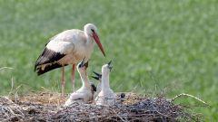 Ptačí rodinky