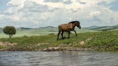 Krajem Čingischána po řece Orchon