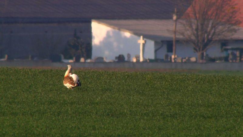kuřata s velkými ptáky videa zdarma černá prdel videa