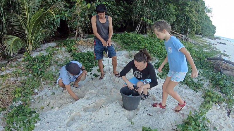 želva pláž připojit