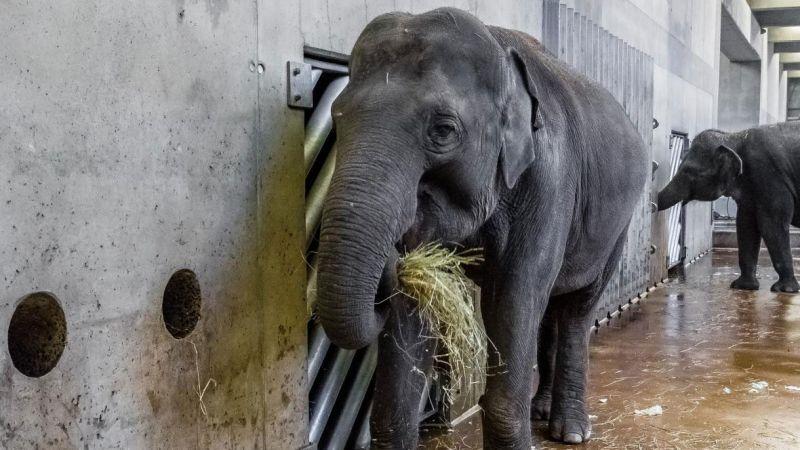 zoo dnes chodí prd roku obchodní